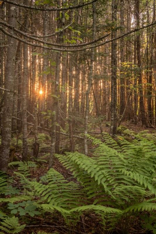 Bosque al atardecer en el Parque Nacional de Fundy