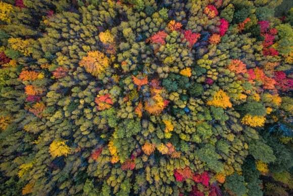 Foto aérea de bosque en otoño