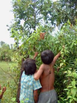 CAMBODGEenfants-mangeant-fruits-du-rotin