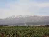 massaya vineyards in the Lebanon