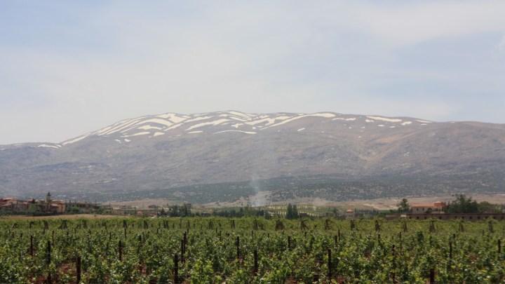 Massaya, vin du Levant