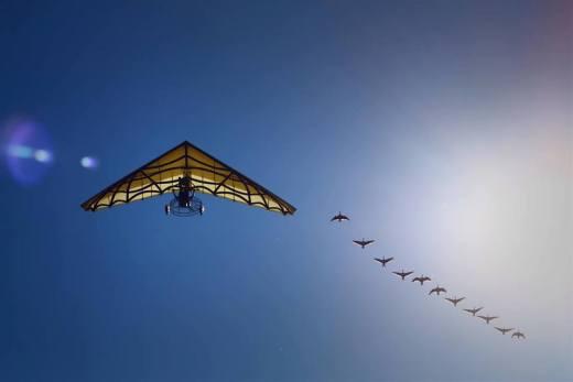 photo d'un deltaplane et oies en vol au grand parc du Puy du Fou