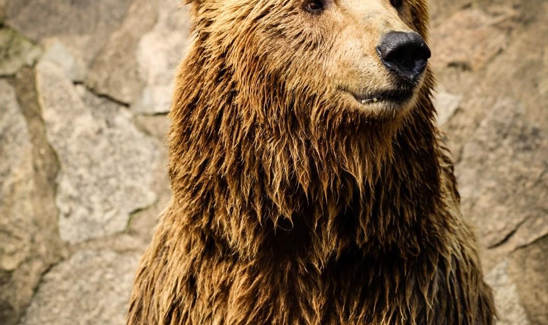 Bear at the Shanghaï zoo