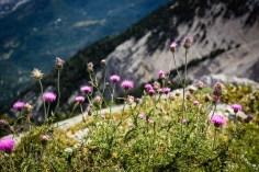 randonnee-mont-ventoux-aout-2014 (4 sur 87) (Large)