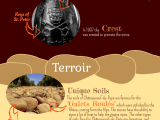 INFOGRAPHICS explaining Chateauneuf-du-Pape wines
