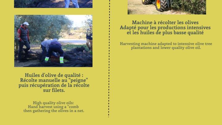 INFOGRAPHIE : La fabrication de l'huile d'olive