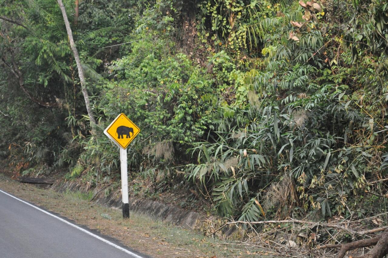 Parc national de Khao Yai : à la recherche des éléphants