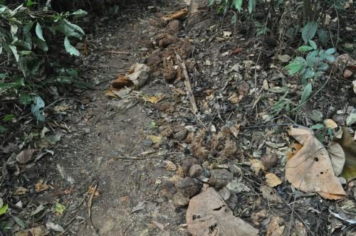 Khao Yai crottes elephants
