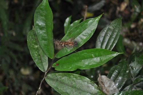 Khao Yai insecte