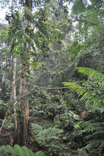 Khao Yai jungle 2
