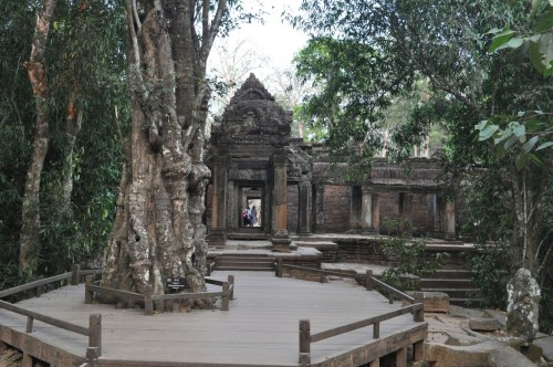 Angkor Ta Prohm 11