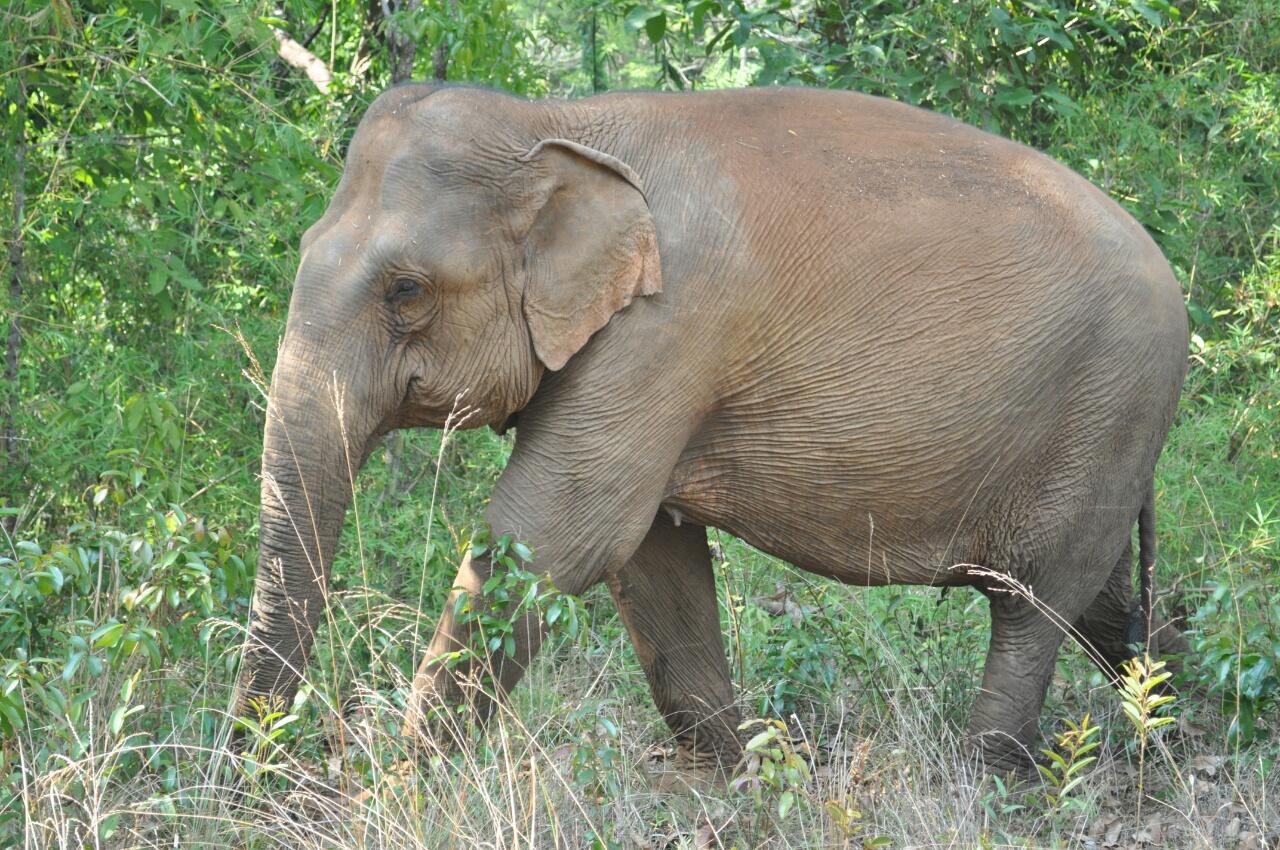 Sen Monorom : 2 jours dans la jungle à la découverte des éléphants