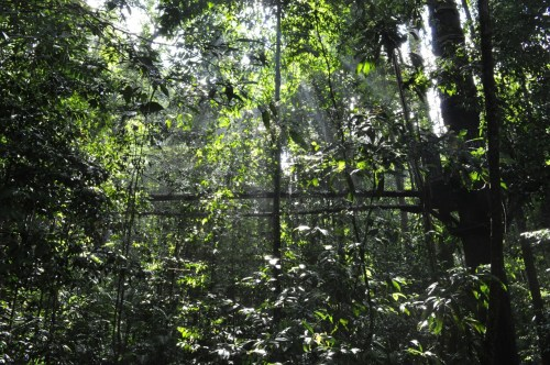 Taman Negara canopy walk 1