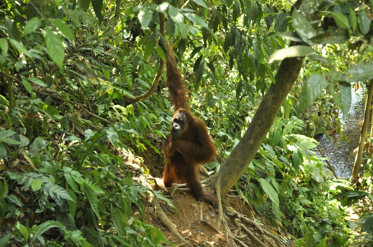 Sumatra : le bilan c'est maintenant !