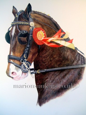 Head & shoulder view of Chestnut a winning brown horse carriage racing horse wearing his black bridle and blinkers with a red prize winning rosette