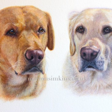 'Charlie & Milo' are both Labrador's but one is red and the other is golden. The painting is a head & shoulder pose, the sun is casting shadows across their faces. They have brown eyes and mainly pink noses.