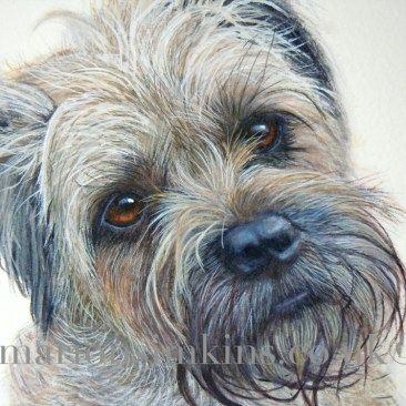 'Lily' the Border Terrier is a closer view of Lily's face. She has beautiful brown eyes and her head is tilted cheekily to one side.