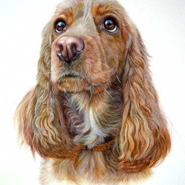Watercolour head & shoulder pet Portait of a golden Spaniel, big brown eyes gazing slightly to the left of viewer, mouth closed wearing a tan collar