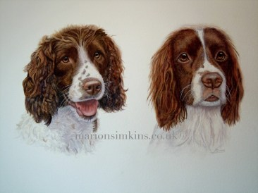'Meg & Millie' the Spaniels is a double dog watercolour pet portrait. The Spaniel on the left 'Meg' has her mouth open. They are both liver coloured.