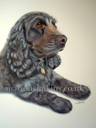 Muffin the Black Cocker Spaniel partial body bespoke commissioned pet portrait watercolour painting. Muffin is laying on the floor, both paws in front of her gazing off into the distance. She has big brown eyes and you can just see that she is wearing a collar from the dog tag under her chin.