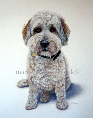 Bespoke commissioned full body watercolour pet portrait painting of Alfie a lowland sheepdog sitting looking directly at the viewer wearing a collar and tag with big brown eyes