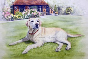 'Poppy' the Golden Labrador bespoke commissioned pet portrait watercolour of Poppy laying on the grass in the garden with flower beds and buildings behind