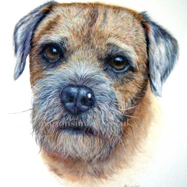 'Ralph' the Border Terrier - a close up of Ralph's face from a larger bespoke watercolour pet Portait with pencil remarques