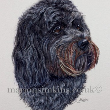 Head and shoulder watercolour portrait of a black Cavapoo, a cross between a King Charles Cavalier and a Poodle. Stanley is looking to the right of the picture, he has beautiful brown eyes with a shiny black nose and unusually red streaks in the fur around his mouth where the sun has caught it.