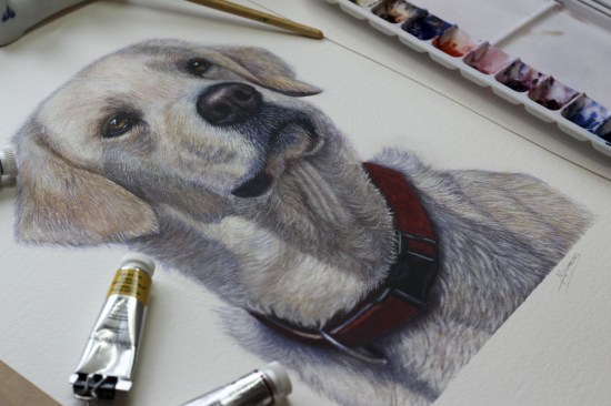 Golden Retriever painted in watercolour with red collar. Tubes of watercolour paint next to it.