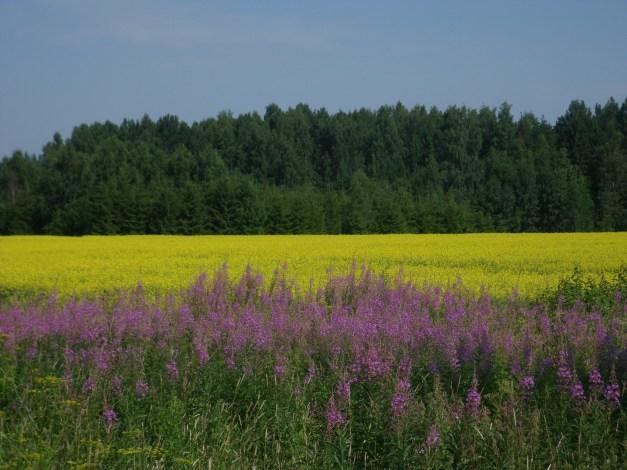 Wildflowers and mustard