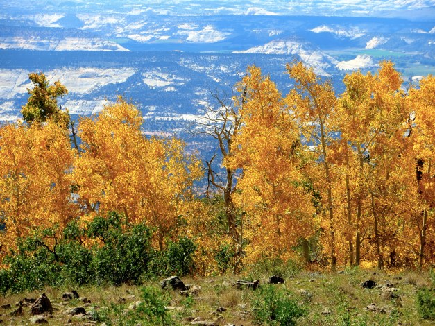 As we climbed a ridge between Capitol Reef and the more eastern parks, we were stunned by the gorgeous aspen trees in bright fall colors