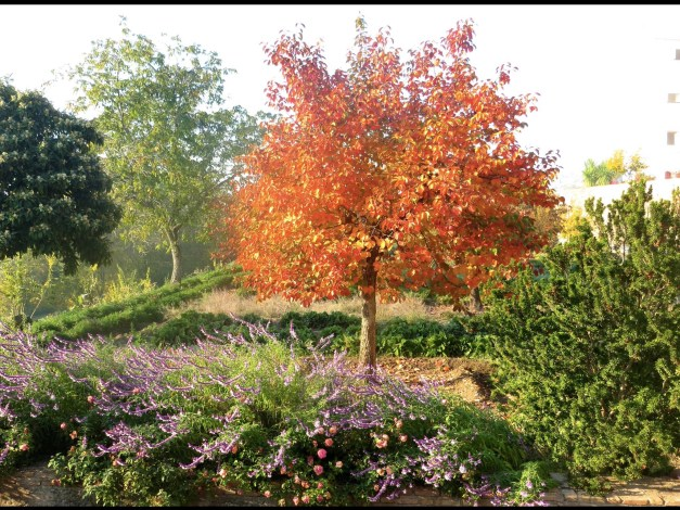 More fall beauty from the Generalife