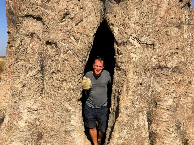 Mark emerging from inside a huge, partly hollow baobab