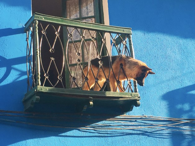 A great big German Shepherd on a balcony saw a smaller dog down below and really wanted down there