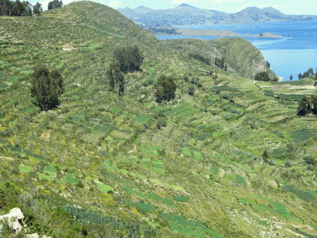There was ancient Incan terracing all over the island