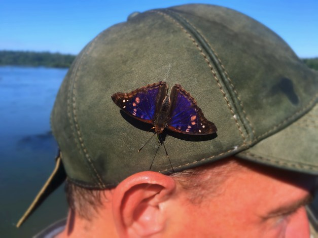And butterflies! I've never seen so many of every size and shape and color and design you can imagine. This one lodged on Mark's hat and went for a ride for quite a ways along the trail.