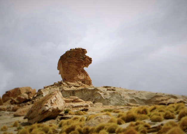 We even saw a lion on the hike, or at least a striking resemblance to the Ritz-Carlton lion logo