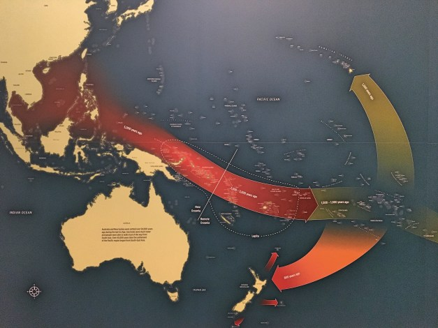 A map from the Auckland Museum showing the migration patterns for populating the South Pacific. Interesting that Australia - and Papua New Guinea just north of there - were settled some 45,000 years before Southeast Asian natives took to the seas to settle all these islands. And that New Zealand was very late in that process, settled only 800 years ago.