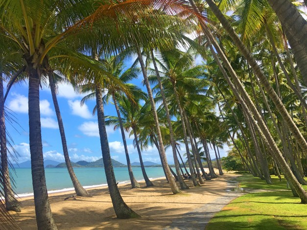 The eponymous palms of Palm Cove along the Coral Sea shore