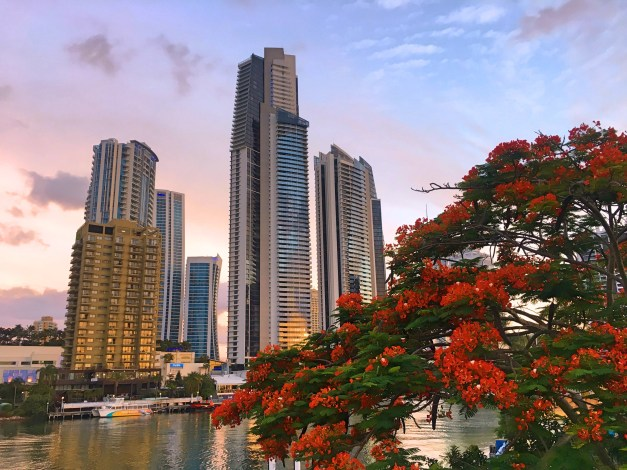 A flame tree and a bit of skyline as evening moves into Surfers Paradise