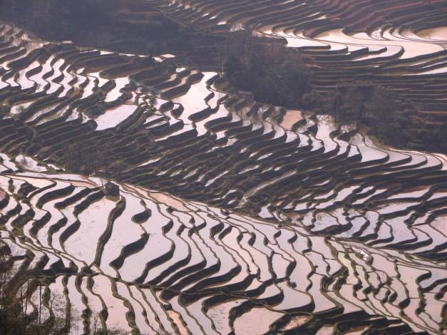 Amazing rice terraces
