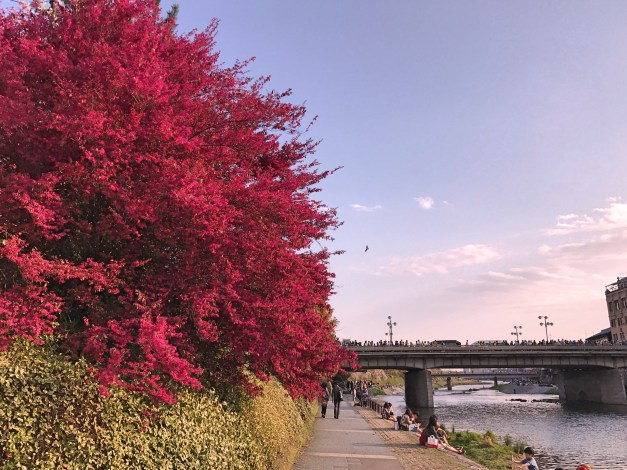 A really red tree along the river. Biking through I didn't have time to enjoy it, taking care not to run over people. Walking by later, though, it was lovely.