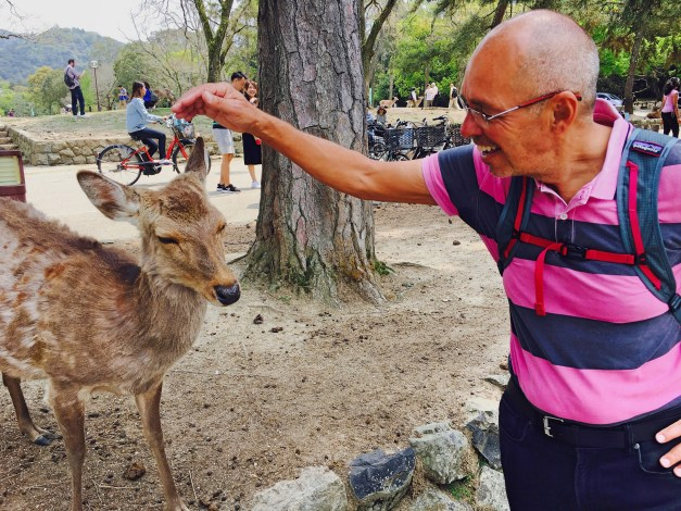 Nara has thousands of tame deer walking around. If you weren't giving them food, they weren't too interested in you.