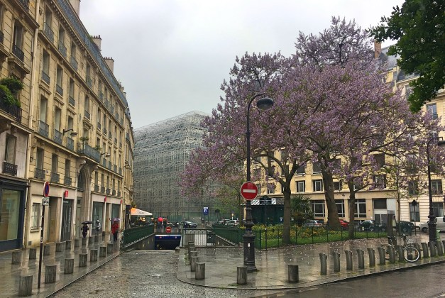 Glistening streets, grand architecture, flower Jacaranda trees - it's enough to make you pray for rain!