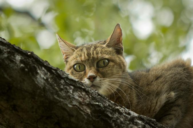 Adandara: A Forbidden Love Between Women (and Cats)