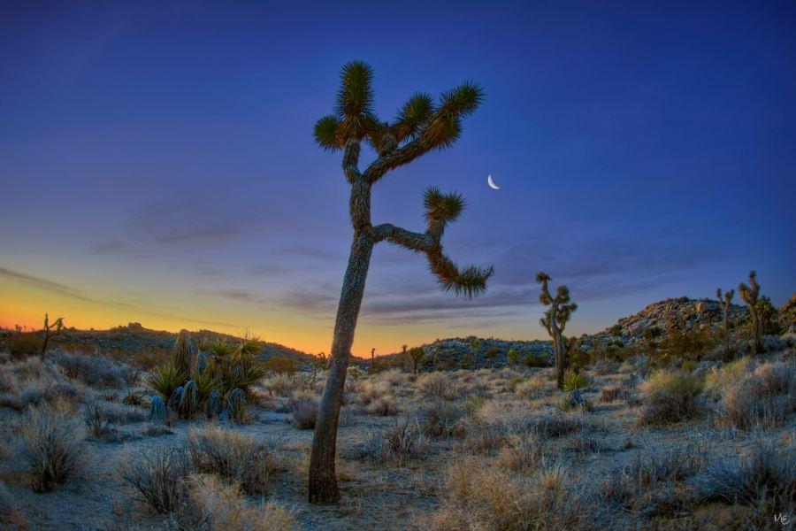 Mark Epstein Photo | Crescent Moon Over Joshua Tree