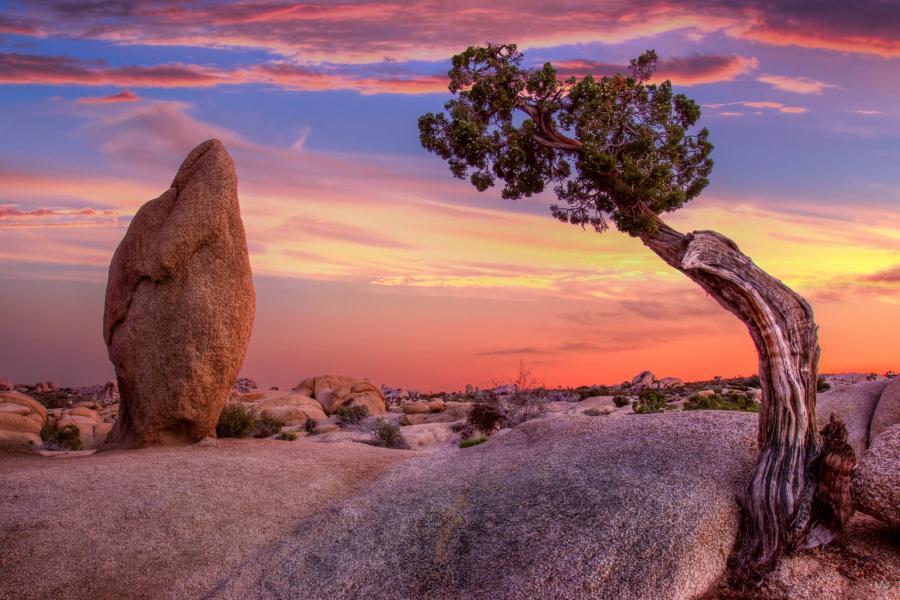 Mark Epstein Photo | Sentinel Sunset