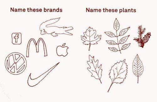 Reconnaitrer vous les feuilles autant que les marques ?