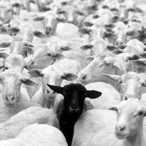 7 claves para no aburrir a las ovejas en las presentaciones de las agencias a los anunciantes