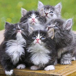gatos youtube